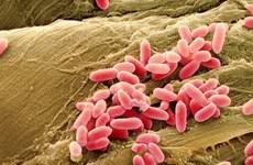 Đột phá mới trong công nghệ tế bào tái tạo da chữa lành vết thương