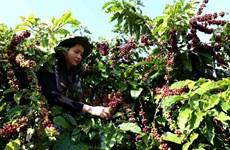 Châu Phi: Thị trường đầy tiềm năng với doanh nghiệp Việt Nam