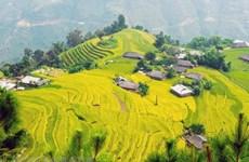 Sức hút lễ hội du lịch mùa thu ở vùng núi cao của Lào Cai