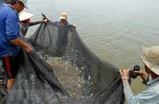 """Đồng bằng sông Cửu Long mùa nước nổi: Mong chờ mùa lũ """"đẹp"""""""