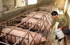 Doanh nghiệp sản xuất thức ăn chăn nuôi phải tự công bố chất lượng
