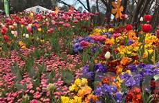 [Photo] 1 triệu loài hoa khoe sắc ở Lễ hội hoa xuân Floriade 2018