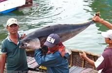 """Khắc phục """"thẻ vàng"""" IUU: Hướng tới xây dựng nghề cá bền vững"""