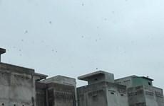 Bùng nổ nuôi chim yến tự phát tại Bình Thuận, gây nhiều tiếng ồn