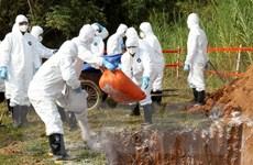 Diễn tập thực hành ứng phó khẩn cấp với dịch tả lợn châu Phi