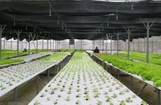 Tỉnh Gia Lai định hướng phát triển theo nền kinh tế xanh