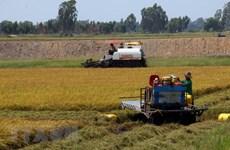 Đồng Tháp: Liên kết tiêu thụ hơn 46.000ha lúa cho nông dân