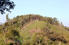 Hỗ trợ cấp chứng chỉ quản lý rừng cho 100.000ha rừng mỗi năm