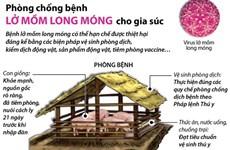 [Infographics] Phòng chống bệnh lở mồm long móng cho gia súc