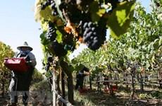 Mỹ tăng sức ép để EU đưa nông nghiệp lên bàn đàm phán thương mại