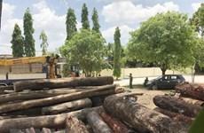 Vụ khai thác gỗ lậu của Phượng 'râu' và đồng bọn: Khởi tố 24 bị can