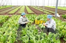 Kim ngạch xuất khẩu rau quả 2 tháng đầu năm giảm 9,9%