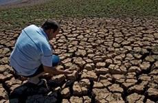 Lượng mưa thay đổi tác động tới chất lượng đất trồng lương thực