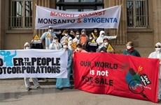 Monsanto bị cáo buộc chi phối giới khoa học và cơ quan quản lý