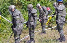 Hàn Quốc bắt đầu đơn phương khai quật hài cốt binh sỹ tại DMZ