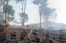 Báo động nguy cơ cháy rừng rất cao tại nhiều địa phương