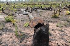 Khởi tố 7 đối tượng vụ phá rừng ở Vườn Quốc gia Phong Nha-Kẻ Bàng
