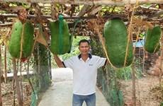 Làng trồng bí đao khổng lồ chuyển hướng làm du lịch cộng đồng