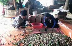 Tín hiệu tích cực từ xuất khẩu đặc sản mận hậu ở Sơn La