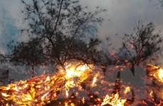 Hỏa hoạn thiêu rụi hơn 15ha rừng phòng hộ ven biển Quảng Bình