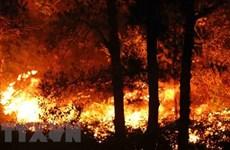 Áp dụng cảnh báo cháy rừng trên điện thoại của lãnh đạo kiểm lâm
