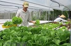 Giá rau, củ ở Đà Lạt tăng cao gấp 2 lần so với tháng trước