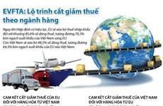 [Infographics] EVFTA: Lộ trình cắt giảm thuế theo ngành hàng
