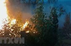 Liên tiếp xảy ra nhiều vụ cháy rừng tại tỉnh Quảng Ngãi