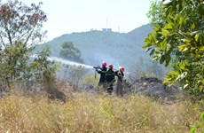 Đà Nẵng: Kịp thời dập tắt vụ cháy rừng trên núi Sơn Trà