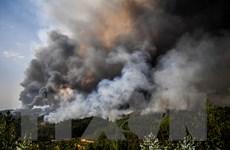 """""""Giặc lửa"""" thiêu trụi hàng nghìn hécta rừng tại Algeria"""