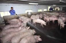 Ngành nông nghiệp khuyến cáo biện pháp chăn nuôi an toàn sinh học