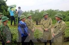Bão số 3: Quảng Ninh, Hải Phòng đề phòng nước dâng và triều cường