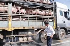 Vận chuyển lợn từ Nam ra Bắc tăng mạnh do thiếu nguồn cung