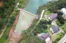 Trồng thêm 1.000 cây thông và mai anh đào ở khu vực hồ Tuyền Lâm