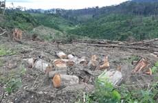 Lâm Đồng: Khẩn trương điều tra vụ phá rừng chiếm đất ở Đam Rông