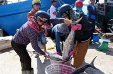 """Khắc phục """"Thẻ vàng"""" IUU: Quản lý chặt tàu cá khai thác thủy sản"""
