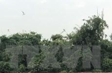 Kinh nghiệm bảo vệ đàn cò ở Di tích quốc gia đảo Cò