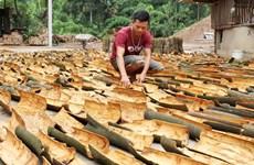 Lào Cai: Xây dựng thương hiệu sản phẩm quế hữu cơ ở Bắc Hà