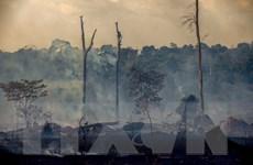 Brazil: Số vụ cháy tại rừng Amazon giảm kỷ lục trong tháng 10