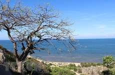 Vườn quốc gia Núi Chúa: Gắn bảo tồn sinh học với phát triển du lịch
