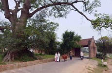 Đường Lâm - Làng Việt cổ đầu tiên được xếp hạng di tích quốc gia