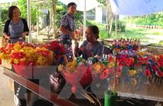 [Photo] Làng hoa giấy Thanh Tiên tô điểm cho mùa xuân xứ Huế