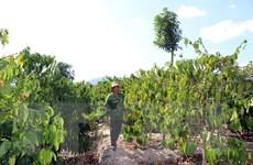 Kon Tum: Người dân hiến hàng nghìn mét vuông đất để xây cầu