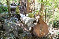 Đắk Nông xử phạt các đối tượng khai thác vàng trái phép trên đất rừng