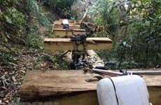 UBND tỉnh Kon Tum chỉ đạo công an tỉnh điều tra vụ phá rừng ở Đăk Tô