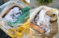 Xe giường nằm chở 630kg thịt chó mèo và nội tạng bốc mùi hôi thối