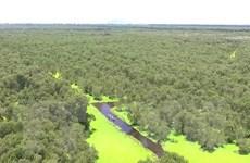 [Mega Story] Quản lý rừng bền vững tại Việt Nam