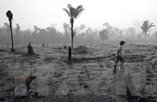 Brazil triển khai gần 4.000 binh sỹ ngăn chặn nạn phá rừng Amazon