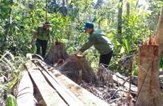 Khởi tố vụ án và truy xét các đối tượng phá rừng ở Phú Yên
