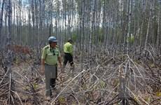 Khẩn trương chống hạn cứu rừng phòng hộ ven biển ở Sóc Trăng